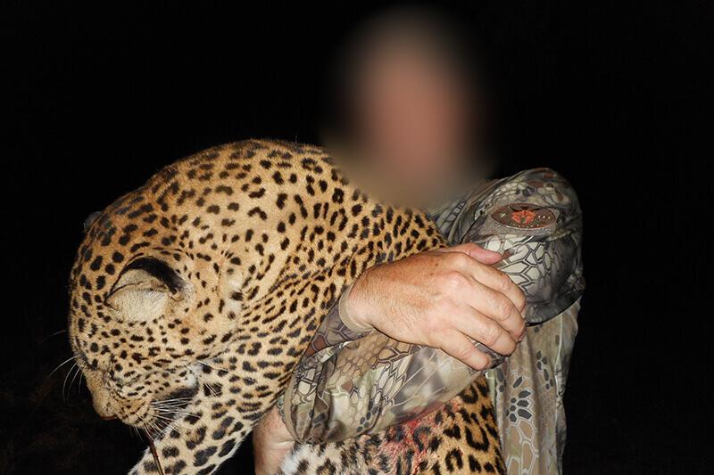 african big cat hunting