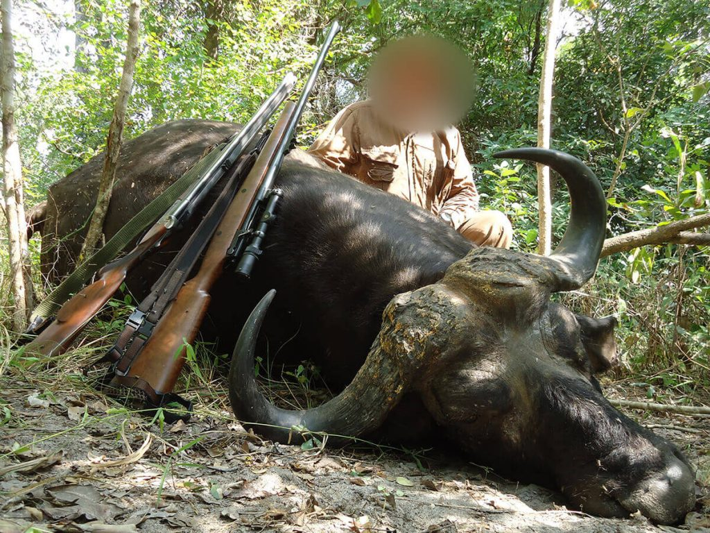 cape buffalo hunts