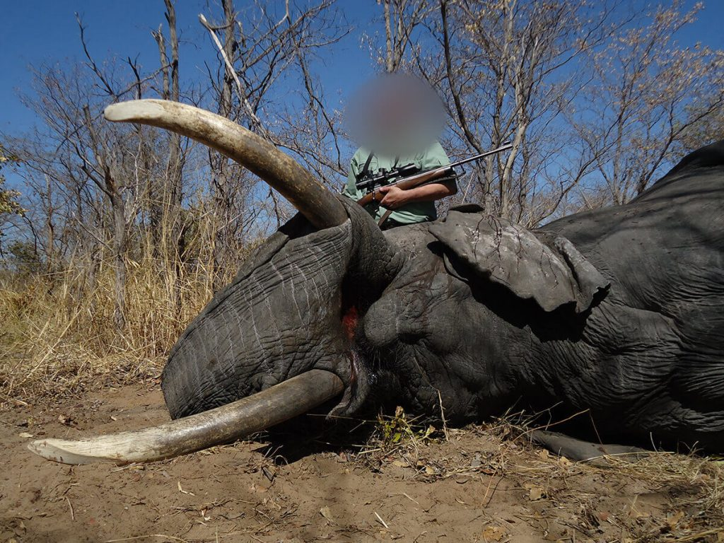 elephant-hunting-safaris