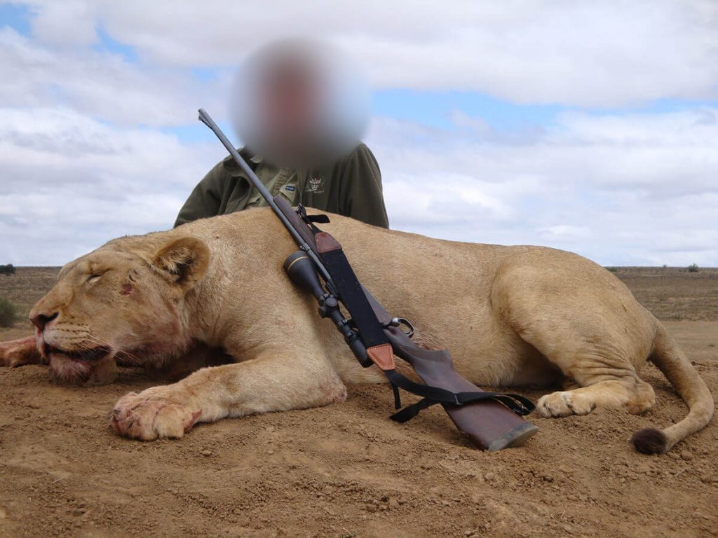 lion-hunting-with-pierre-van-tonder-big-game-safaris