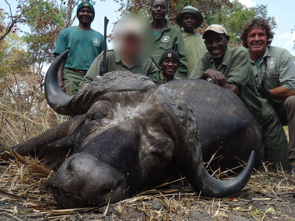 buffalo hunting in africa