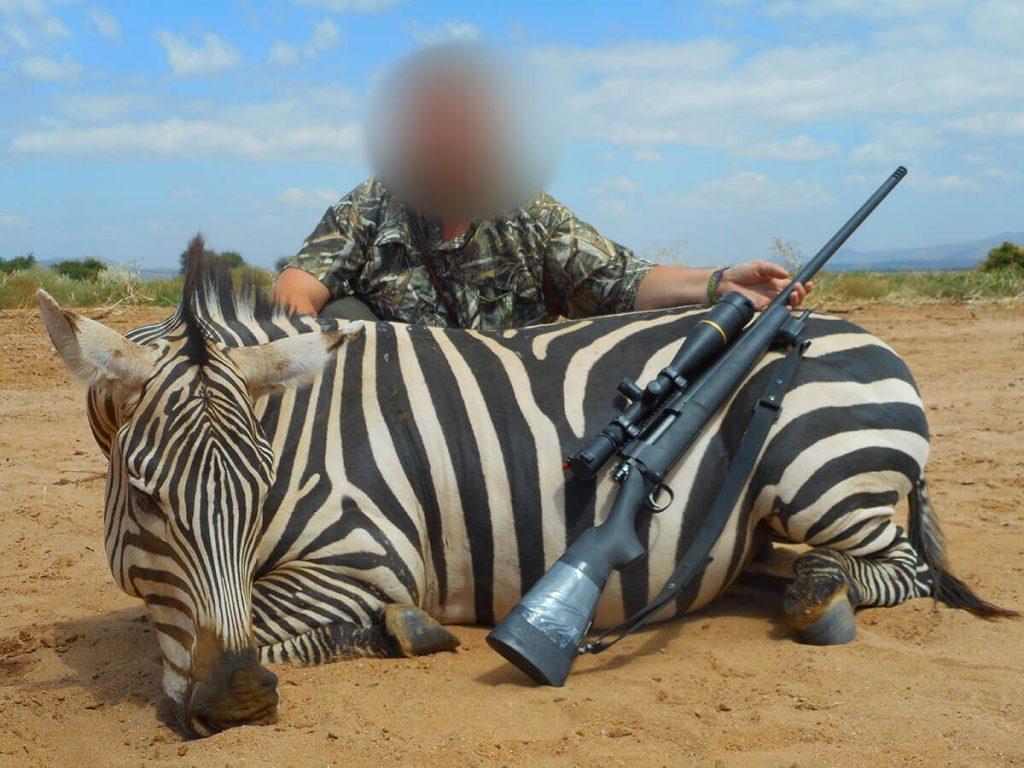 zebra hunt